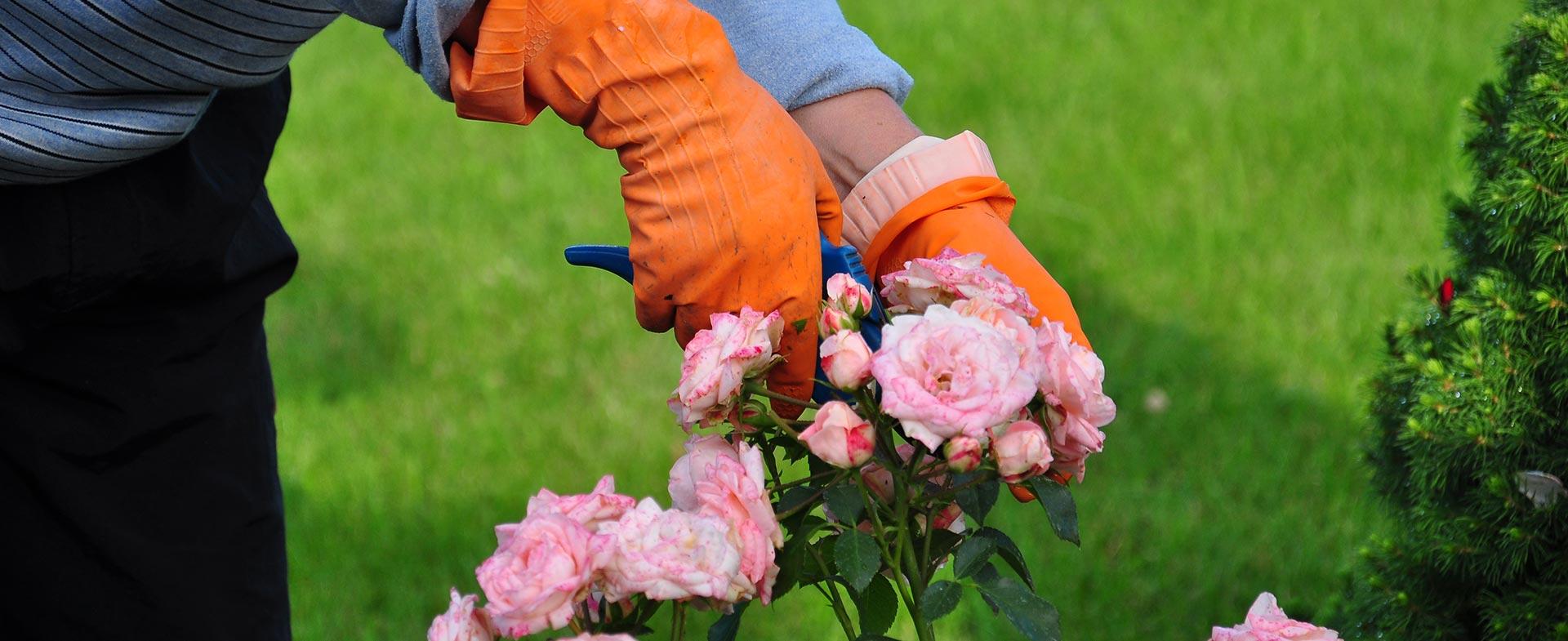 Gardeners Gospel Oak